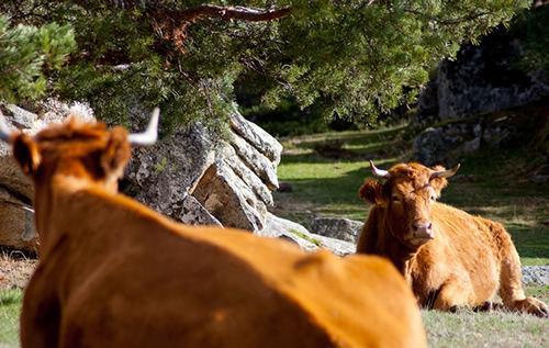 Turismo rural en el Monte Abantos