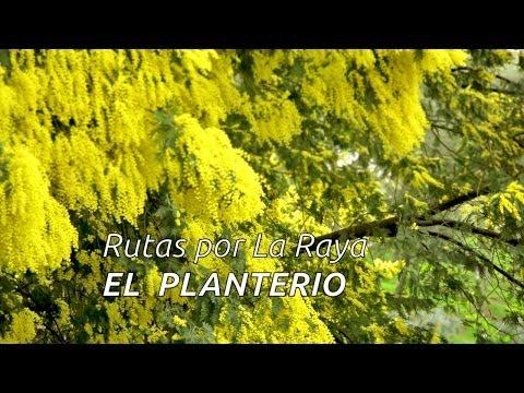 Date una vuelta por La Raya Hispano-lusa (Ruta senderista del Planterío)