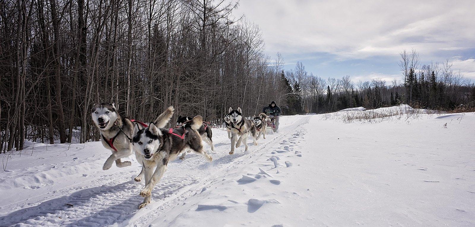 Outdoor Activities Dog Sled Ottawa Outaouais