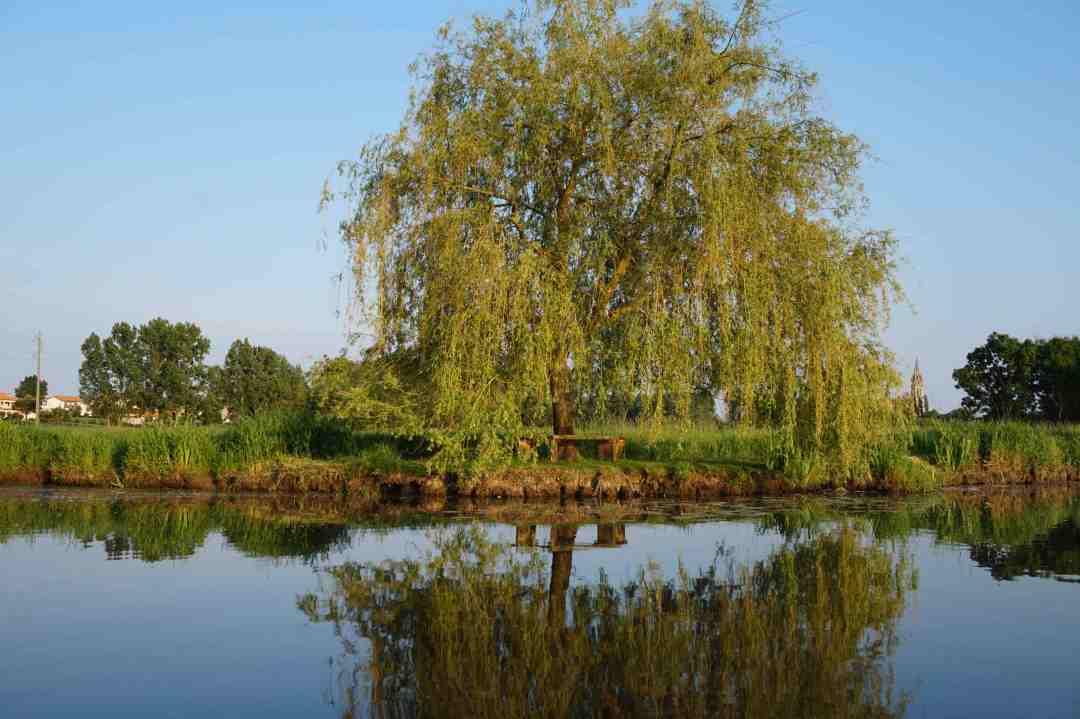 Nature marais de l'Achenau