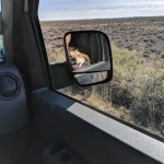 Petrified Forest Driving with dog in rear view mirror