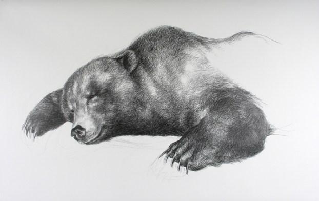 bear-draw