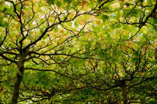 berlin_trees