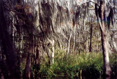 swamp_1