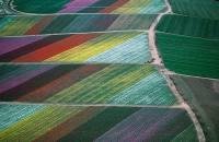 flower-fields-carlsbad-ca-und-35095-20090727-131