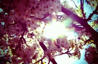 Blossom, Matthew Naquin