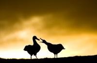 Stefano Unterthiner, Albatross beak to beak
