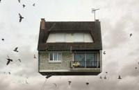 Laurent-Chehere-a-vendre (birds)