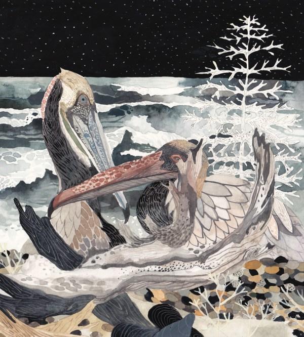 Morin_Winter Pelicans