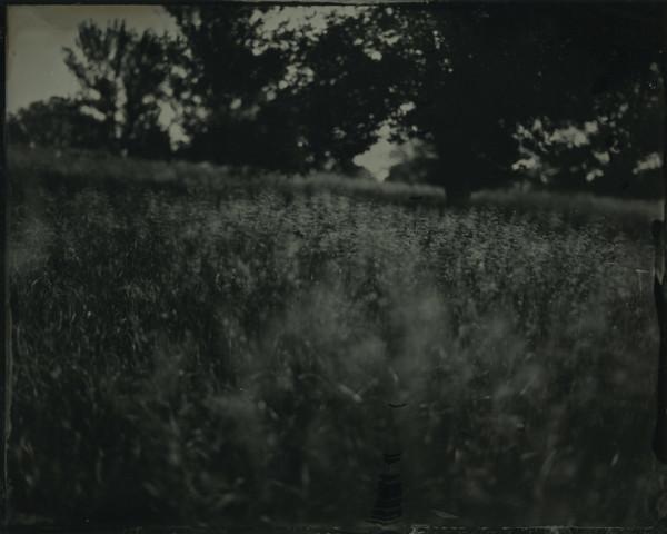 Rashod Taylor, Countryside_2013
