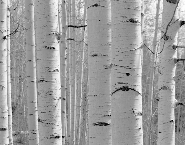 William Lemke, Aspens Utah