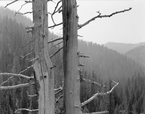 William Lemke, Dead Trees Idaho
