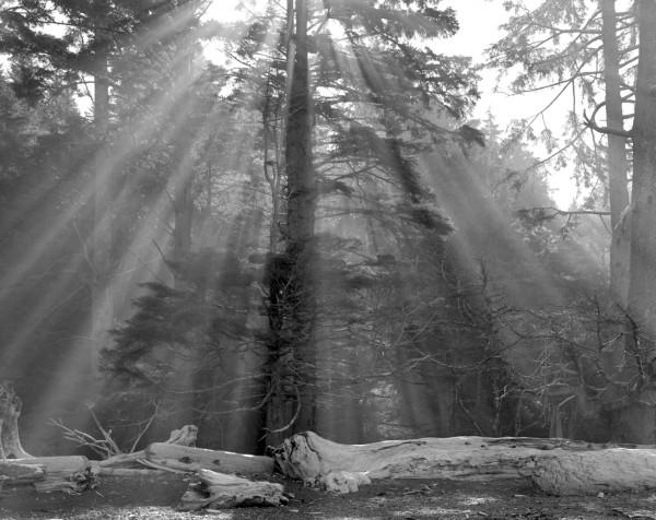 William Lemke, Suns Rays Rialto Beach
