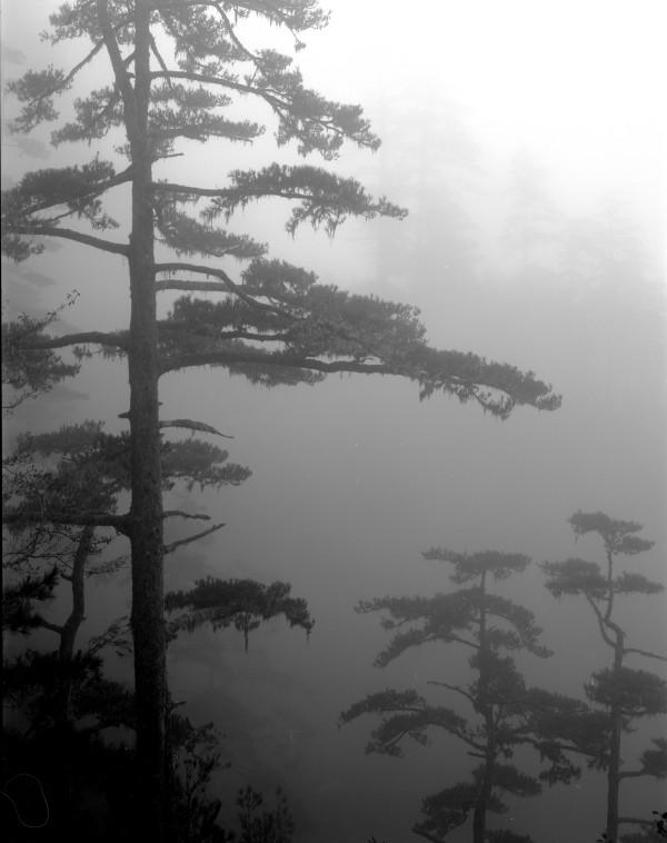 William Lemke, Trees Taiwan
