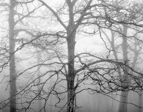William Lemke, Trees and Fog 2 Blue Ridge