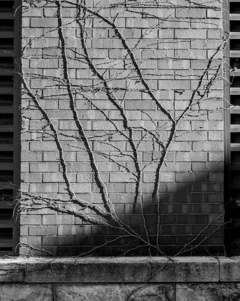 Kevin Nance, creeper (vine on brick)