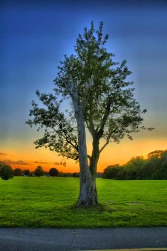 Mahbubur Rahman, double tree