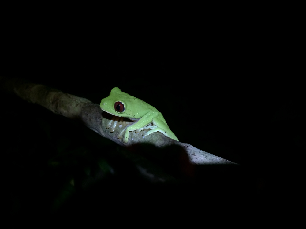 Hiking trail in Corcovado_adventure trip_tree frog