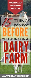 Thinking about extending your Australian working holiday visa by working on a dairy farm? Here are some things you should know before you do! #australiaworkingholiday #regionalwork #farmwork #australia #backpacking