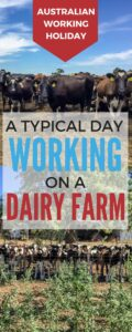 Heading to Australia on a working holiday and looking to extend your visa for another year? Working on a Dairy Farm is a great way to tick off your 88 days. Find out what a typical working day is like on a dairy farm here. #australiaworkingholiday #australia #dairyfarm #regionalwork #88days