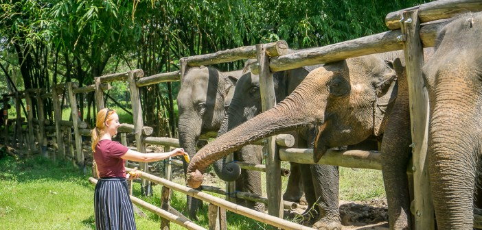 Elephant Valley Thailand: The best ethical elephant sanctuary in Chiang Rai