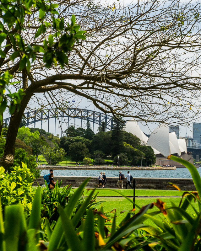 Sydney Botnaic Gardens