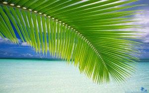 beach-palm-leaf-1920x1200