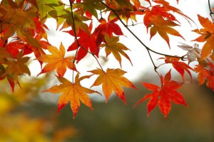 fall-leaves-tree (1)