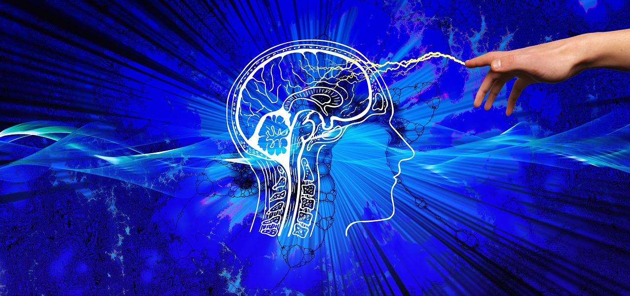 Liderazgo y cerebro