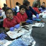 4 EP NATURAL SCIENCE