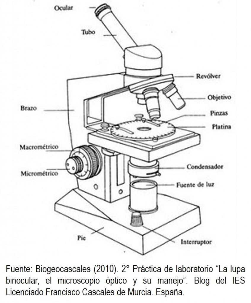 Microscopio Optico Y Sus Partes Sketch Coloring Page