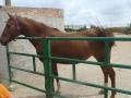 cavalls-10