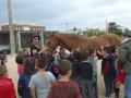 cavalls-17