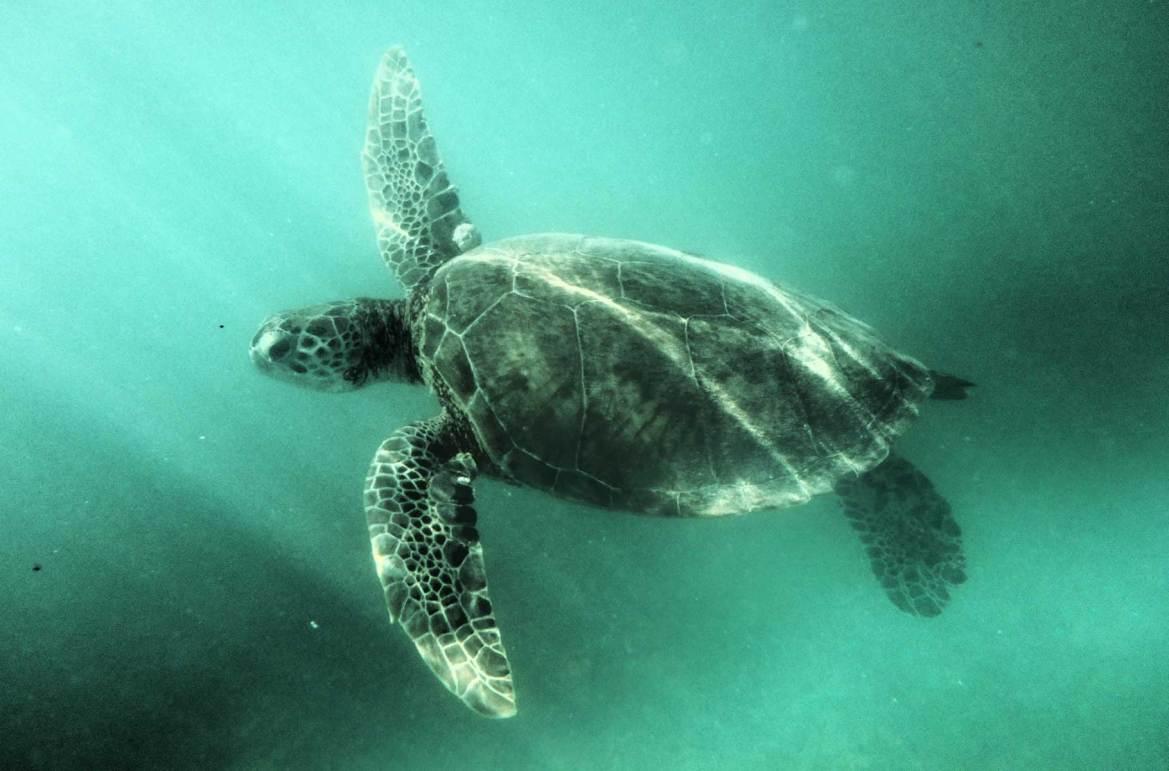 Fotos de viagem - Playa Akumal, Riviera Maia (México)