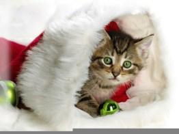 Gato_en_Navidad-1024x768-178010