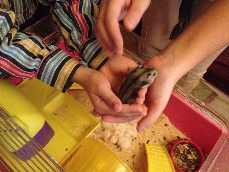 Escuela de padres: ¿Regalar una mascota a los niños en Navidad?