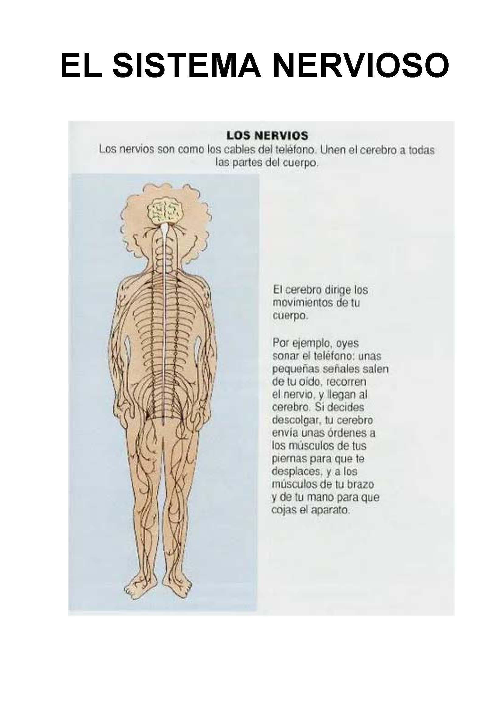 Fichas Para Trabajar El Cuerpo Humano
