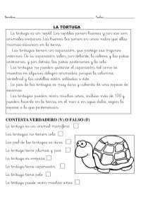 LA TORTUGA-1