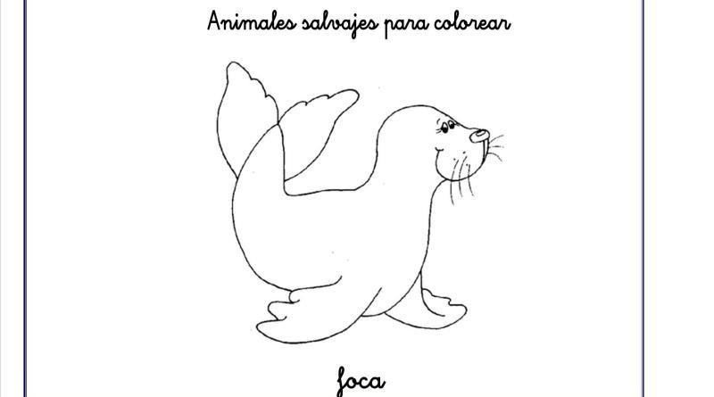 foca colorear