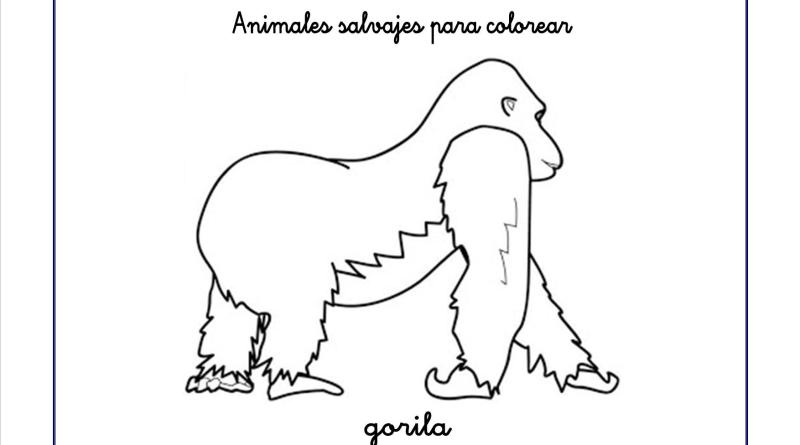 gorila colorear