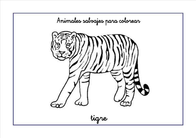 tigre colorear
