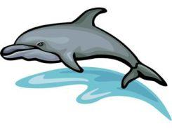 animales marinos 19