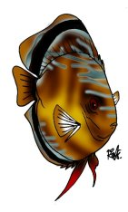 animales marinos 36