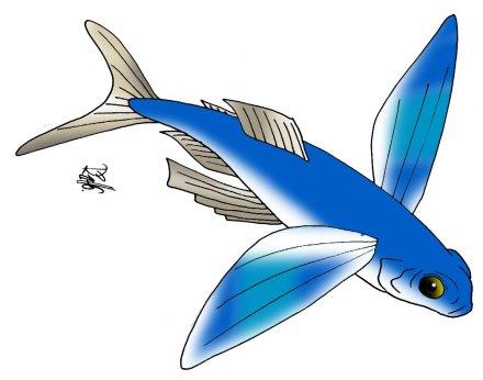 animales marinos 62