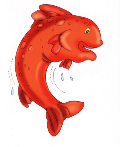 animales marinos 63