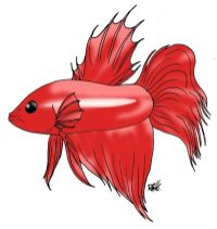 animales marinos04