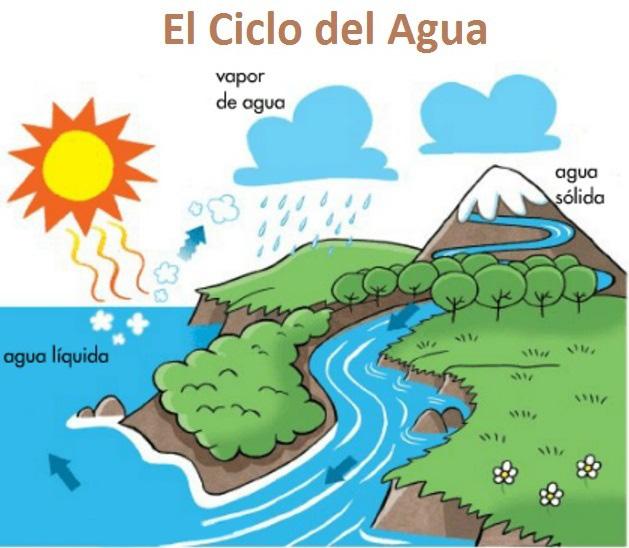 ciclo del agua, ciencias naturales, conocimiento del medio, fichas primaria, fichas infantil