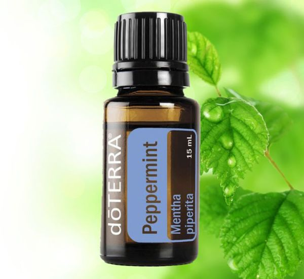 Mentha Piperita, Peppermint