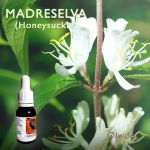 Madreselva (HONEYSUCKLE)