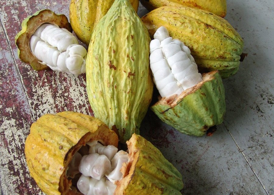"Boosting Cocoa Prices ""The Right Thing To Do,"" Despite Bottom Line Impact"
